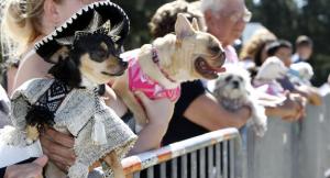 Daugiausia kostiumuotų šunų