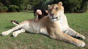 Didžiausias katinas